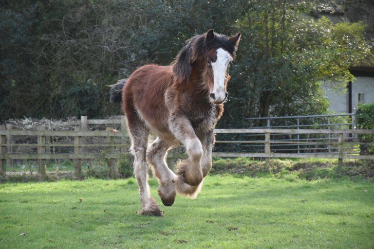 Arkle Running
